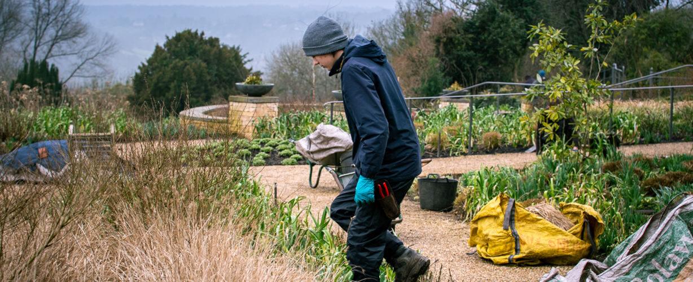 Gardening volunteer